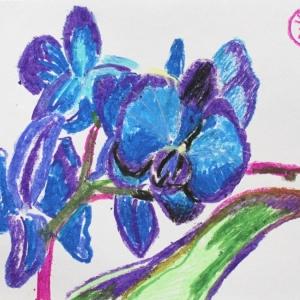 Синие орхидеи   Blue orchid