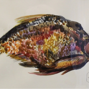 Рыба   Fish