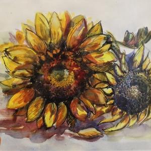 Подсолнухи   Sunflowers